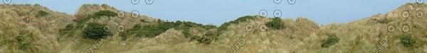 BG030 grassy sand dunes texture