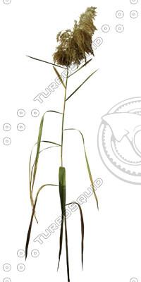 Grass_25.tga