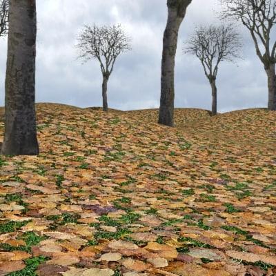 G266 autumn fall leaves texture