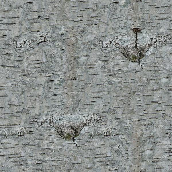 BRKT036 bark silver birch