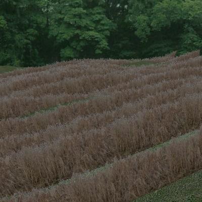 PLNT015 long grass reeds texture
