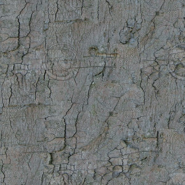 TBRK050 old tree bark texture