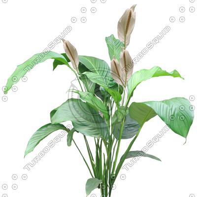 FlowerL_07.tga