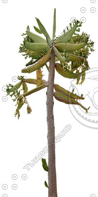 Desert_plants_15.tga