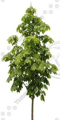Tree_14.tga
