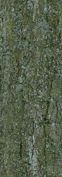 bark009_large.jpg
