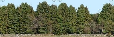 TRL001 treeline tree line texture