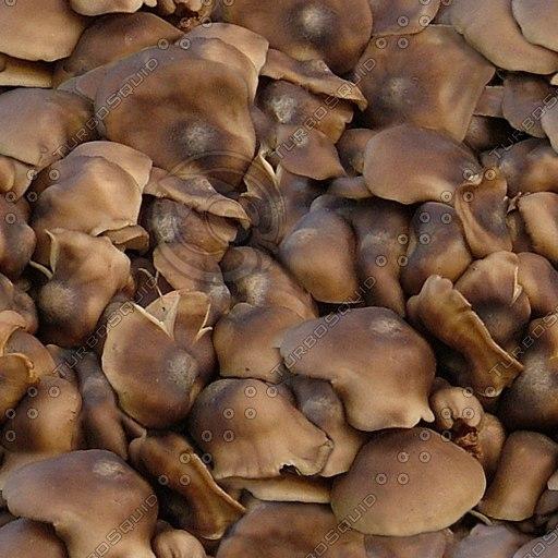 Fungus002.jpg