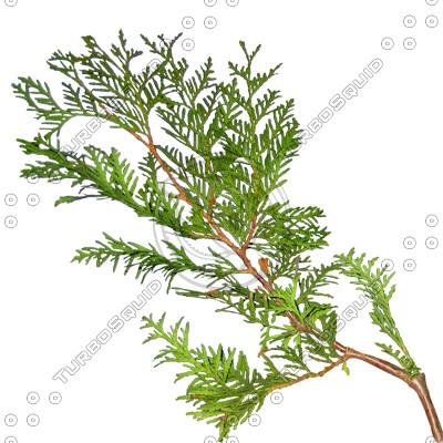 Branch_s_27.tga