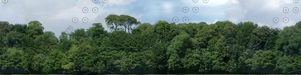 BG021 treeline trees background