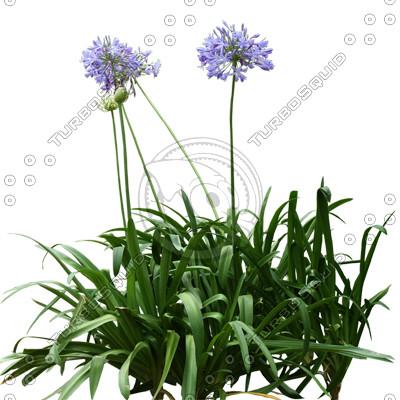 FlowerL_30.tga