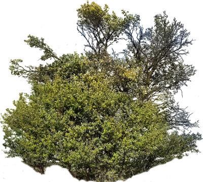 tree43