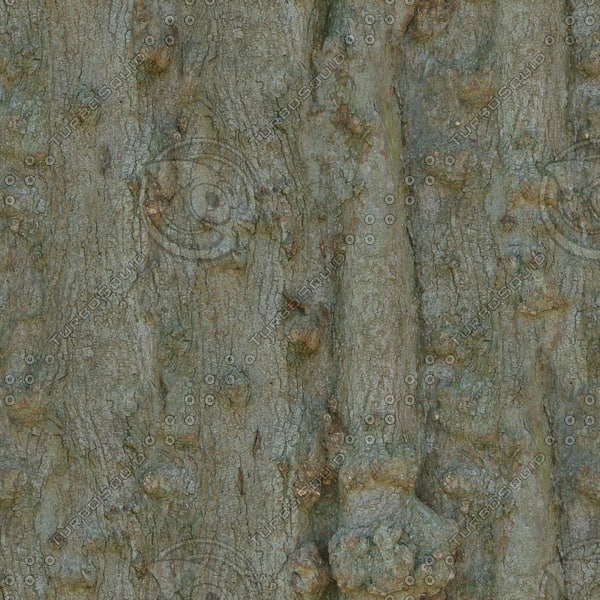 TBRK052 mature tree bark texture