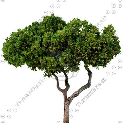 Tree_N_05.tga