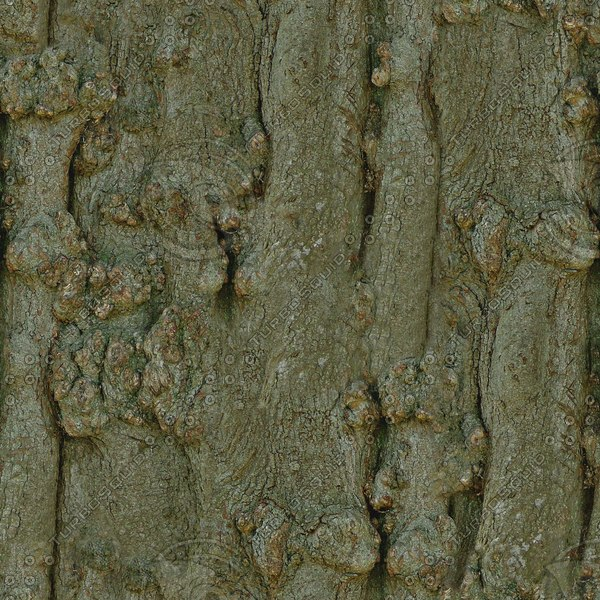 BRKT020 beech tree bark