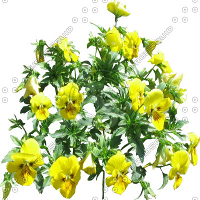 FlowerL_45.tga