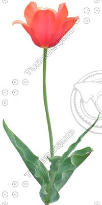 FlowerL_19.tga