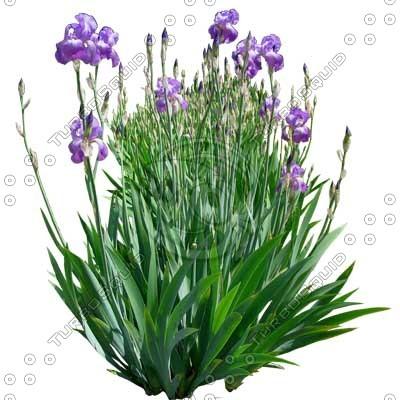 Flower_H_02.tga