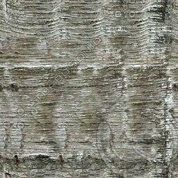 UPTBRK07 tree bark texture