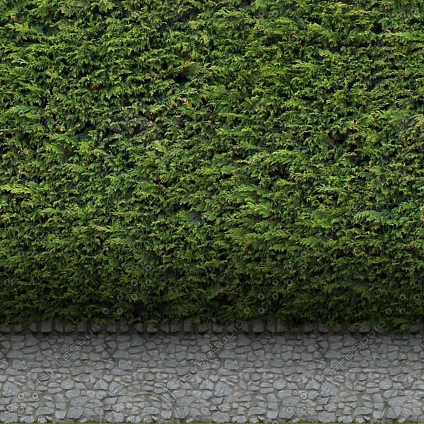 H005 garden hedge wall texture