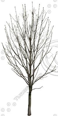 Tree_dead_01.tga