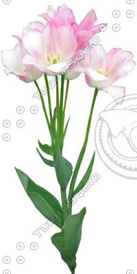FlowerL_17.tga