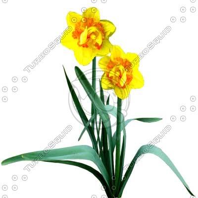 Flower_L_11.tga