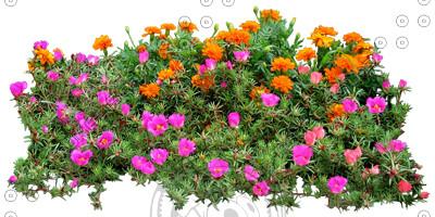 Flower_H_30.tga