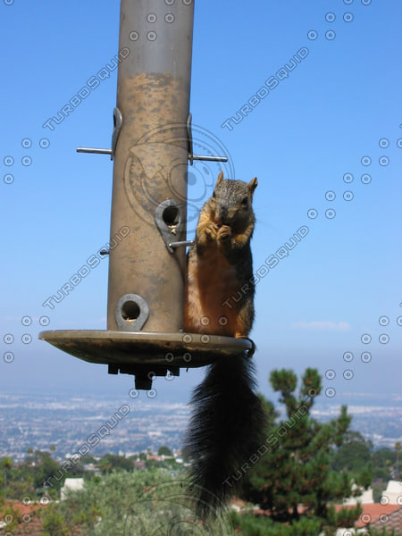 squirrel 01.JPG
