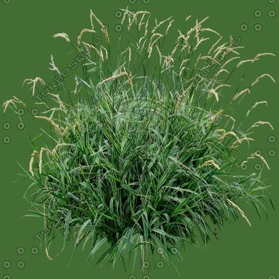 Grass_09_01.jpg