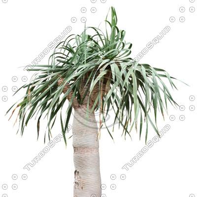 Palm_05.tga