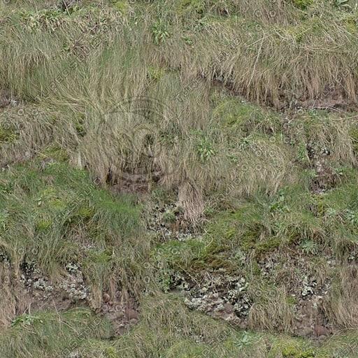 G348 grassy hill hillside texture
