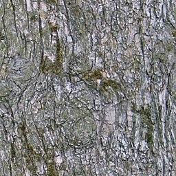 UPTBRK10 tree bark texture