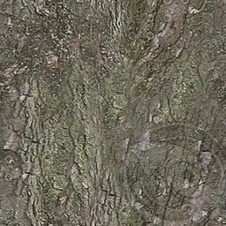 UPTBRK05 tree bark texture