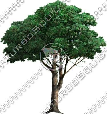 tree_04.tga