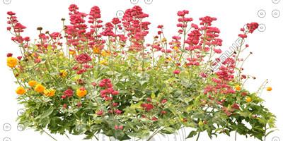 FlowerL_32.tga