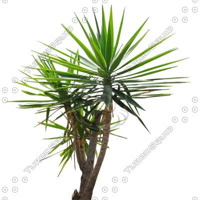 Palm_48.tga