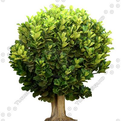 Tree_tropic_03.tga