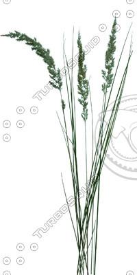 Grass_22_01.jpg