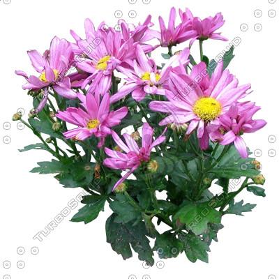 Flower_H_08.tga