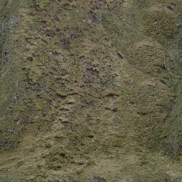 G305 grass grassy hillside