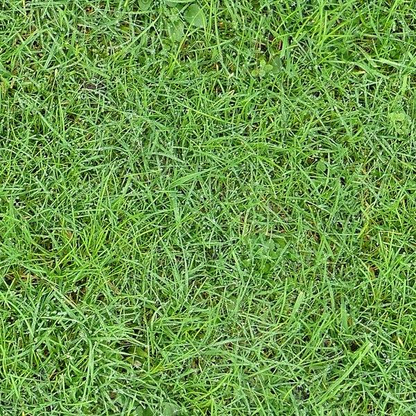 G271 lush grass dew texture