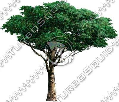 tree_03.tga