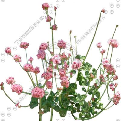 FlowerL_06_01.jpg