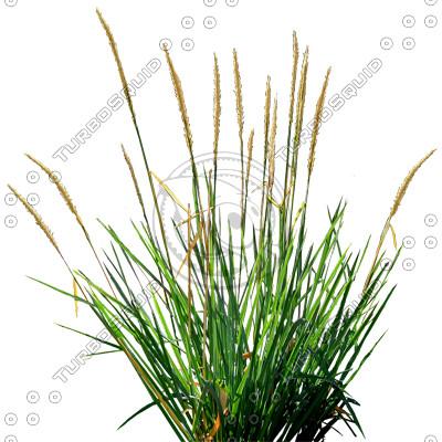 Grass_18.tga