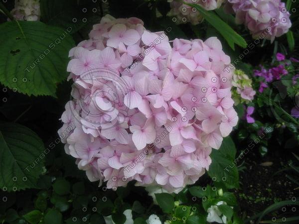 flowers_2635.JPG