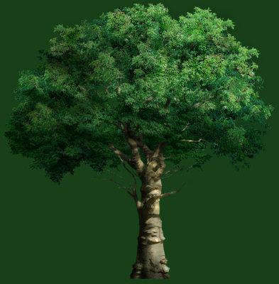 tree_01.tga