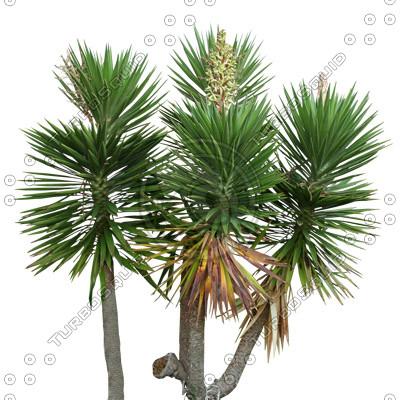 Palm_34.tga