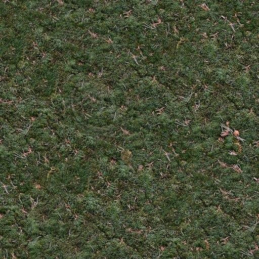 G109 moss forest floor texture