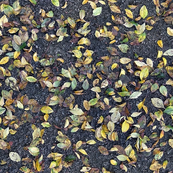 G268 leafy tarmac fall texture